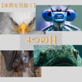 """【本質を見抜く力】できる人が実践!4つの目""""鳥の目/虫の目/魚の目/コウモリの目"""""""